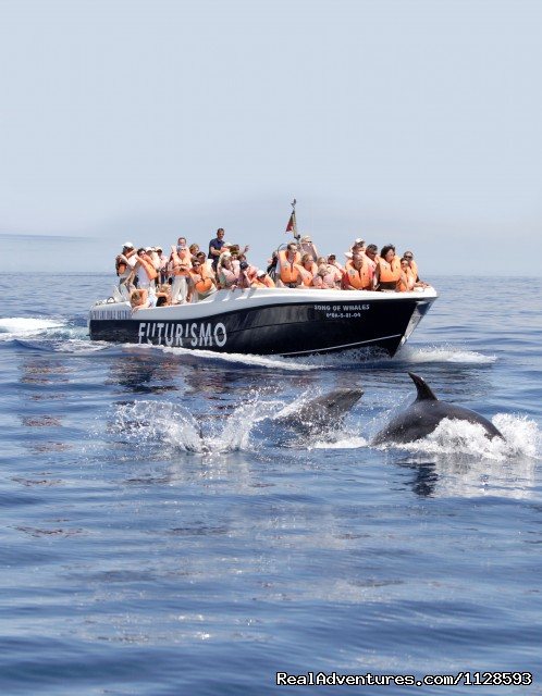 Song of Whale with botlenose dolphins - Azores A Prime Destination For Whale Watching