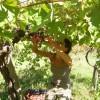 Welcome to B&B Tra i  Frutti, Sicily, Agrigento