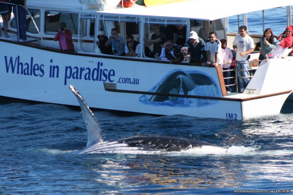 Whales up close with Gold Coast Whale Watching | Image #3/4 | Gold Coast Whale Watching