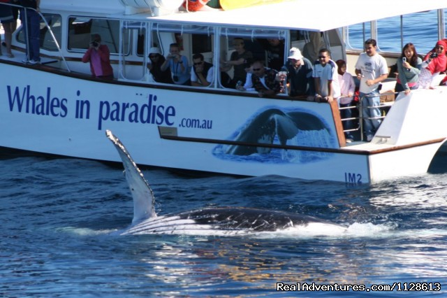 Whales up close with Gold Coast Whale Watching - Gold Coast Whale Watching