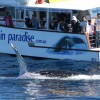 Whales up close with Gold Coast Whale Watching