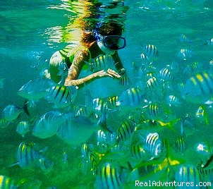 Sometimes there are more fish than water - Snorkel SVI  Culebra Eco-Tour