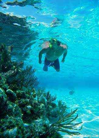 Reefs are shallow, no need to scuba dive (#5 of 9) - Snorkel SVI  Culebra Eco-Tour