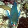 Snorkel SVI  Culebra Eco-Tour