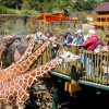VISIT CHEYENNE MOUNTAIN ZOO