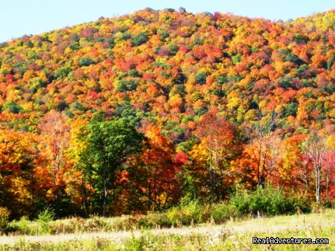 Fall foliage - Affordable Guided Hiking & Kayaking Vacations