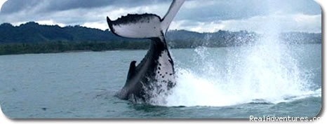 RicaCostaRica Adventure Tours - whales (#3 of 4) - Sauvage Rica Costa Rica Tours