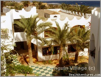 Accommodation , Diving , tours , Dahab