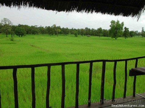 The rice fields - GECKO VILLA - unique experiences of NE Thailand