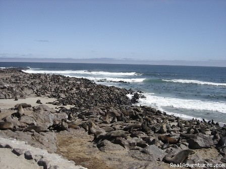 Cape Fur Seals at Cape Cross - Namibian Camping Tours and Coastal Day Tours