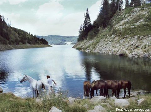 Dospat Lake and horses - Equestrian&Adventure vacation in beauty Bulgaria
