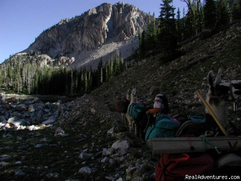 guided adventure programs in Idaho and Oregon: Llama trekking in the Sawtooth Wildernes