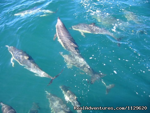 Dolphins in the Bay - Island Retreat - Kawau Island Experience