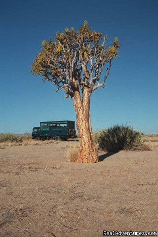 Quiver Tree, Namibia - Adventure Overland Safaris with Africa Travel Co
