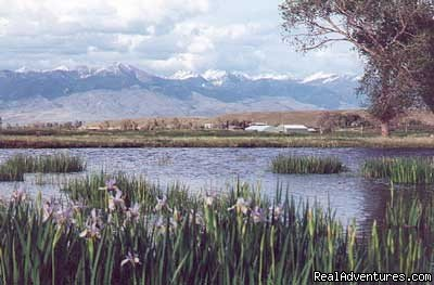 Spring View with Wild Irises | Image #16/19 | Riverfront Cabins on a Private 1400 acre ranch