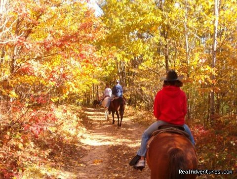 Image #11/15 | Gentle,well-trained Horses-Horseback Adventures