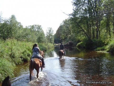 - Gentle,well-trained Horses-Horseback Adventures