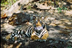 Professionally Escorted Wildlife Holidays To India New Delhi, India Wildlife & Safari Tours