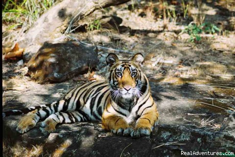 Professionally Escorted Wildlife Holidays To India