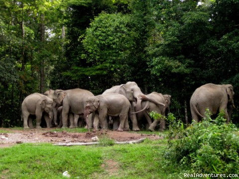 Elephants in Khao yai national park - Luxury nature based tours in Thailand