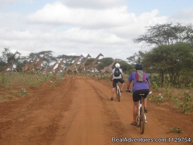 Traffic jam - Kenya and Tanzania Adventurous African Cycle Tour