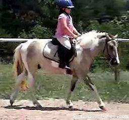 Overnight Horse Accomodations, Lessons, Trail Ride Horseback Riding Dobson, NC, North Carolina