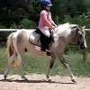 Overnight Horse Accomodations, Lessons, Trail Ride Dobson, NC, North Carolina Horseback Riding