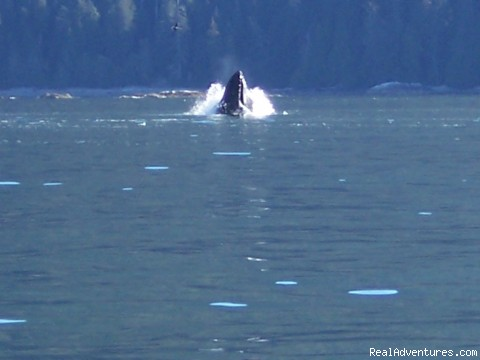 On many trips you will see whales - Fantastic Vancouver Island Fishing Adventures