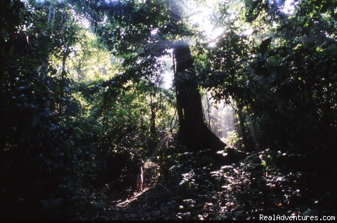 Rainforest wildlife spotting: Tabin's rainforest