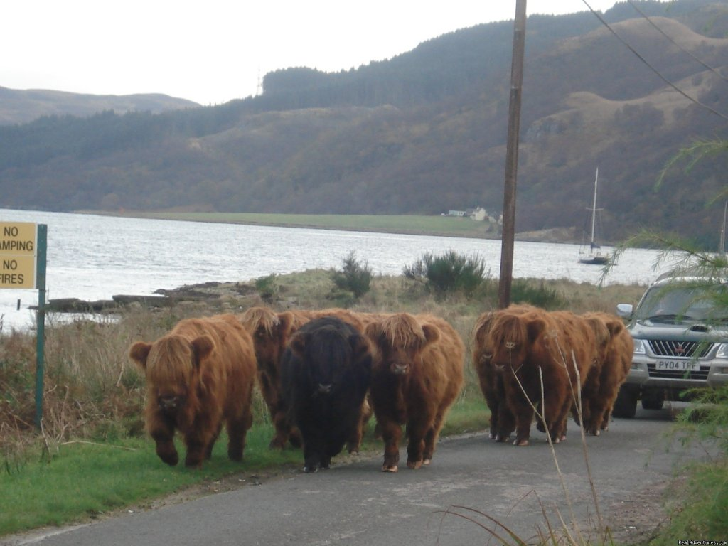 'rush hour' in carrick castle | Image #5/10 | Lochside Accomodation In A Rural Location