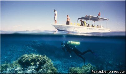 Private Day tours for Cruise ships from Aqaba Port and hotels