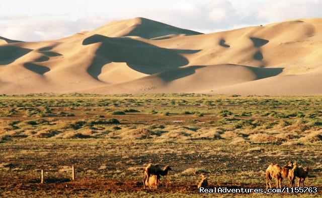 Khongoryn Els sand dune (#13 of 25) - Discover Gobi desert with Idre's tour in Mongolia.