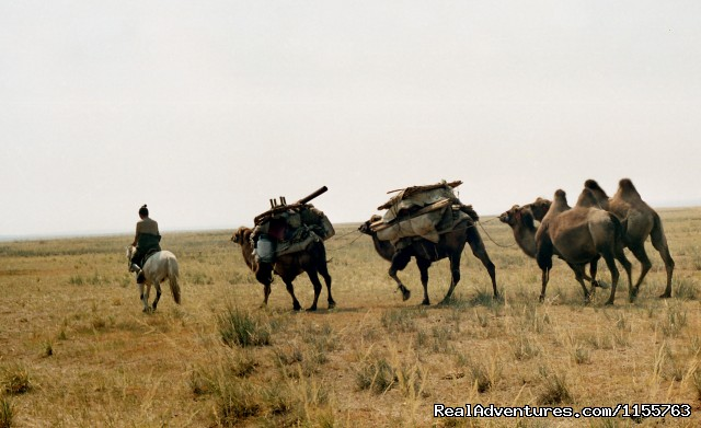 Camel caravan (#16 of 25) - Discover Gobi desert with Idre's tour in Mongolia.