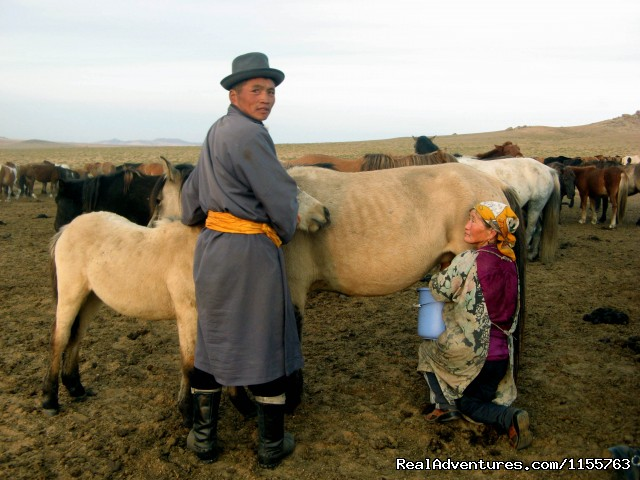 Milking mare (#20 of 25) - Discover Gobi desert with Idre's tour in Mongolia.