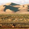 Khongoryn Els sand dune