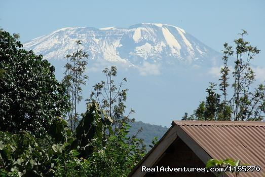 View Of Mt. Kilimanjaro From Milimanicottages - Milimani Self Catering Cottages