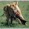 GoodHost vaccation,best deals on safaris/mt trekk.