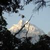 Tour & Treks in Darjeeling, Sikkim, Nepal, Bhutan