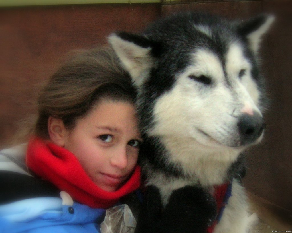 Our sled dogs are famously friendly! | Image #3/9 | Dog Sledding Vacations & Dog Mushing Tours