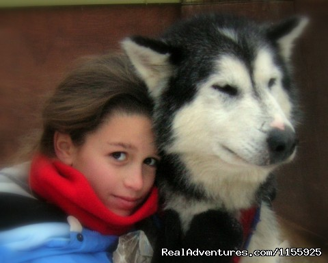 Our sled dogs are famously friendly! - Dog Sledding Vacations & Dog Mushing Tours
