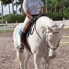 Gold Stirrup Riding Academy