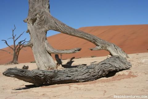 Sossusvlei, Namib Naukluft Park, Namibia - New African Frontiers Tours & Safaris