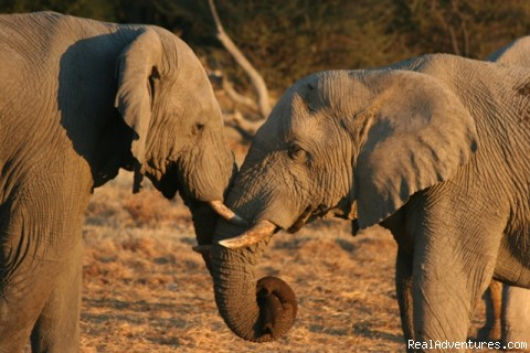 Elephant, Etosha National Park, Namibia - New African Frontiers Tours & Safaris