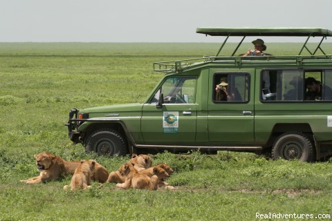 Game Drive - New African Frontiers Tours & Safaris
