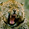 Photo Safaris in South Africa for Photographers