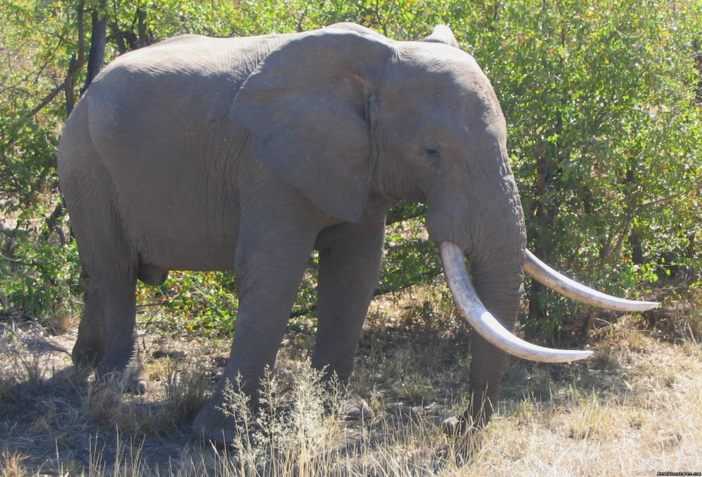 Elephant in Kruger National Park. | Image #6/7 | The adventure starts at Elephant Walk B&B