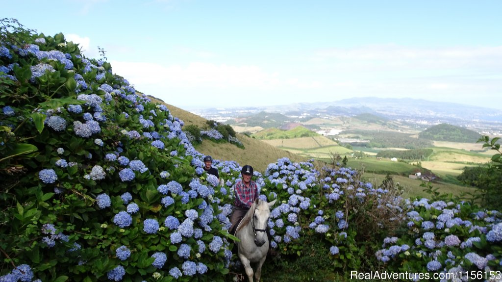 Riding a flower trail. | Image #4/17 | Unforgettable riding weeks at Quinta da Terca