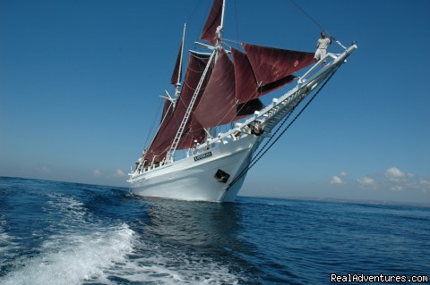 Cruising with the Katharina - SEATREK, Sailing Adventures Indonesia