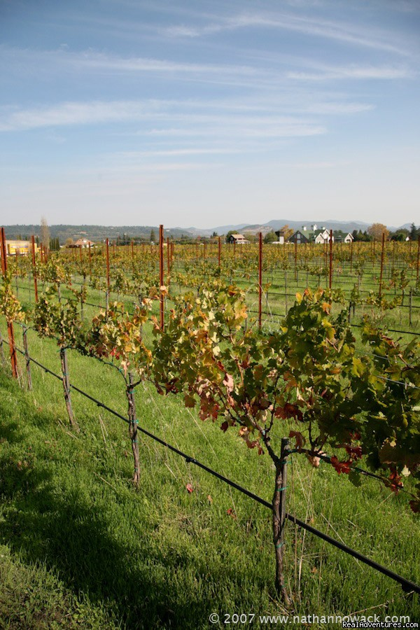 Image #2/14 | 2 Days in the Napa Valley Wine Country