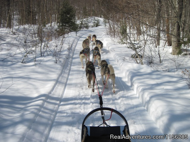 On The Trail - Vermont Dogsledding and Guided Tours